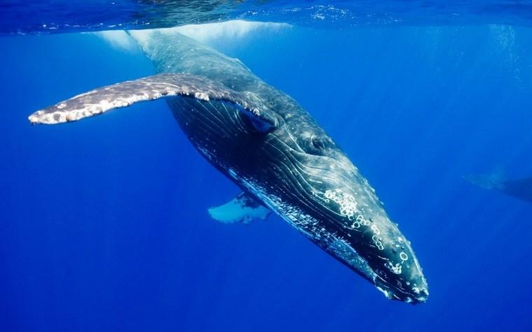 10 động vật khổng lồ dưới đáy đại dương