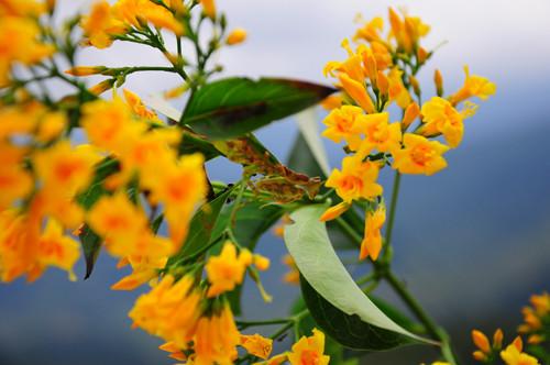 10 loài cây độc nguy hiểm trên đường du lịch