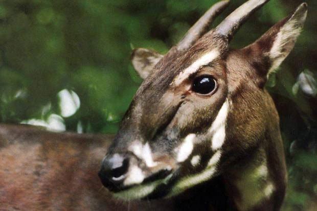 10 loài động vật gặp nguy hiểm nhất hành tinh