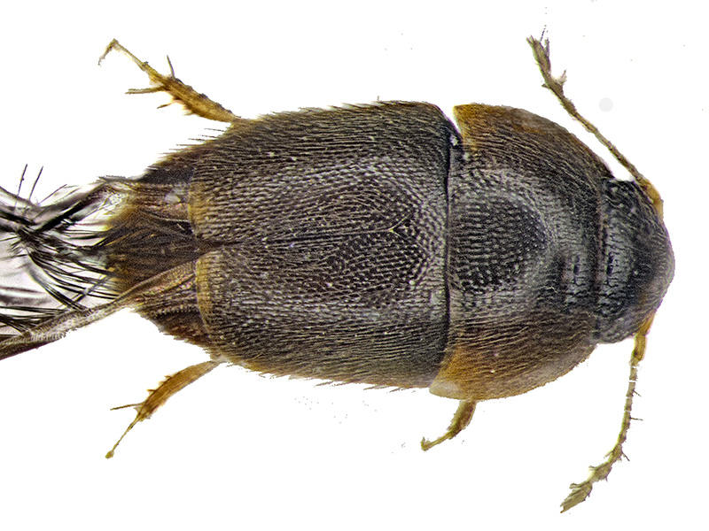 10 loài mới phát hiện ấn tượng nhất năm 2016