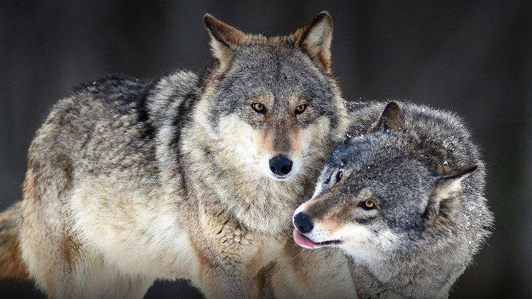 10 sự thật về động vật mà chắc là bạn chưa nghe thấy bao giờ đâu