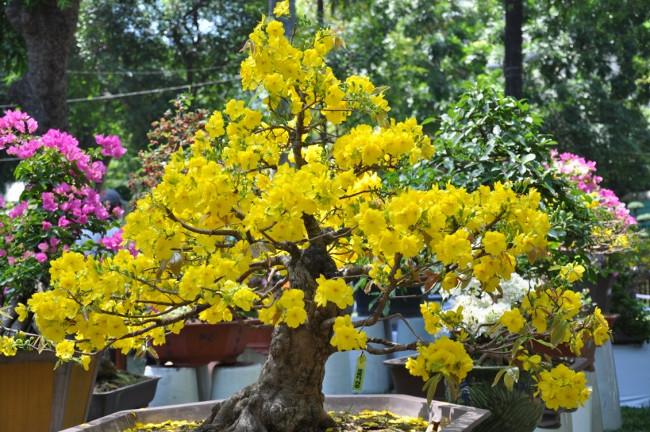 12 loại cây cảnh mang tài lộc vào nhà ngày Tết