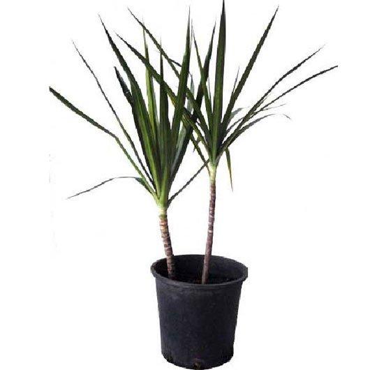 12 loại cây làm sạch không khí trong nhà