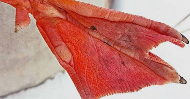 9 sự thật về loài vịt khiến bạn té ngửa