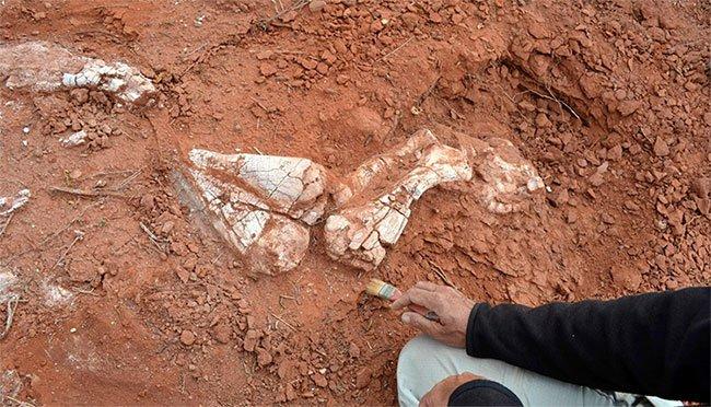 Argentina phát hiện hóa thạch khủng long sống cách ngày nay hơn 200 triệu năm