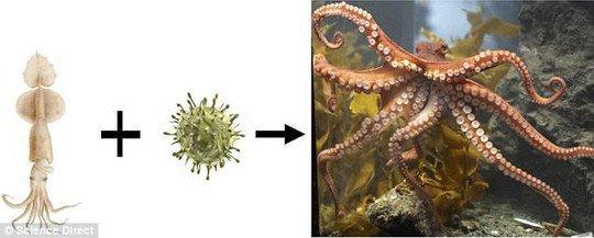 Bạch tuộc là con lai của sinh vật ngoài hành tinh?