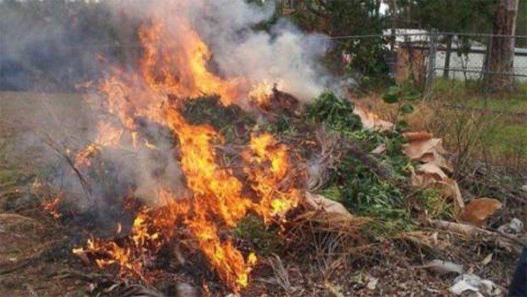 Bạn có bị phê thuốc nếu ở gần một cánh đồng cần sa đang cháy không?