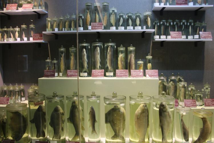 Bảo tàng sinh vật trong trường đại học Trung Quốc