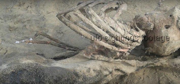 Bí ẩn bộ xương ngoài hành tinh dạt vào bờ biển Anh