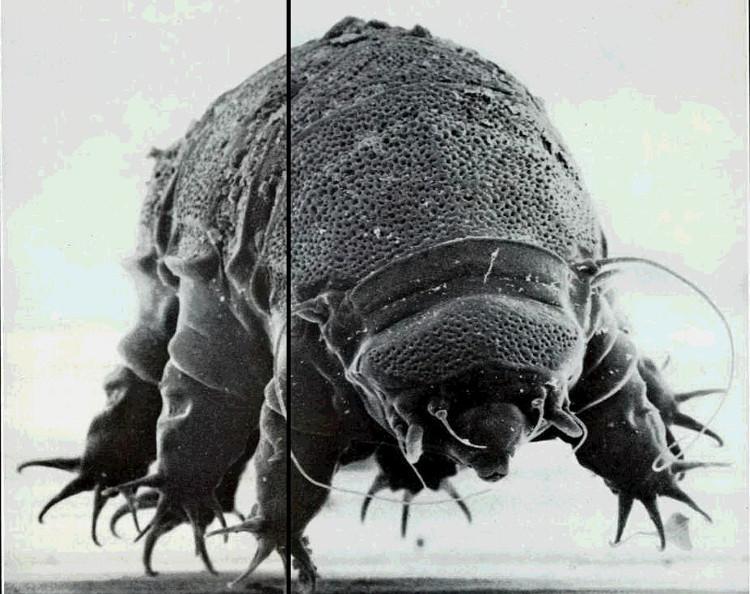 Bí ẩn đằng sau sinh vật bất tử duy nhất trên Trái đất