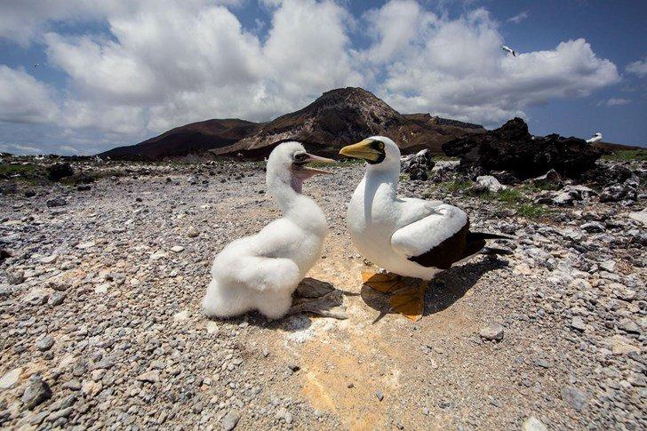 Bí ẩn hòn đảo bị coi là hỏa ngục đối với nhà bác học Charles Darwin