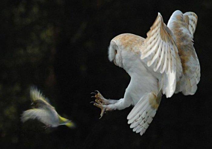 Bí ẩn về loài chim báo hiệu cái chết