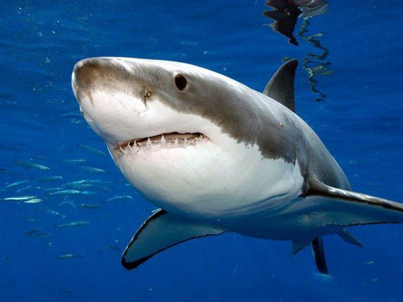 Bí ẩn về quái vật đã khiến cho cá mập lớn phải sợ hãi