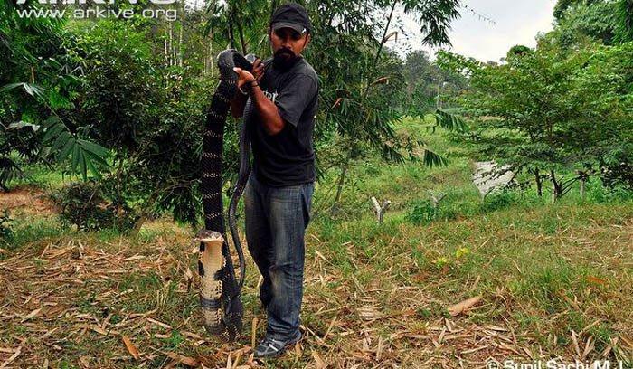 Bí ẩn vùng đất của bầy hổ chúa khổng lồ