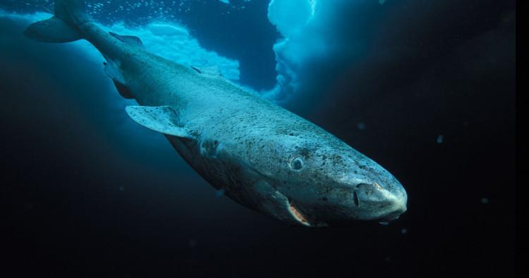Bí mật có thể quyết định tương lai của loài người nằm trong con cá voi này