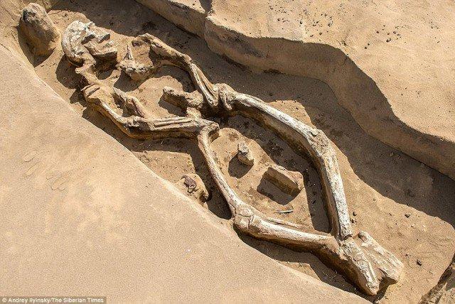 Bộ xương xoắn vặn 1.300 năm tuổi khiến giới khảo cổ bối rối