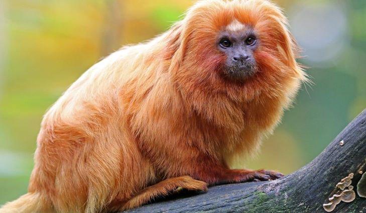 Brazil phát hiện 12 loài động vật mới tại rừng nhiệt đới Amazon