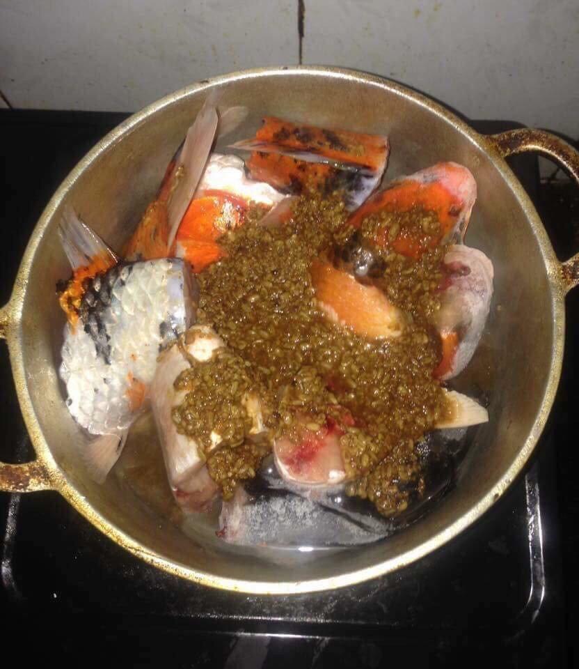 Cá chép Koi của Nhật Bản đắt tiền đến mức nào?