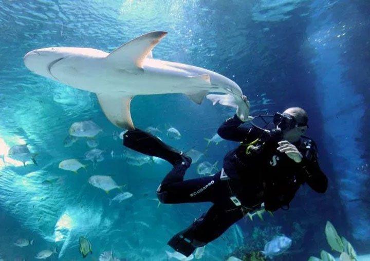 Cá mập có đáng phải chịu tiếng xấu do chúng ta gán ghép hay không?