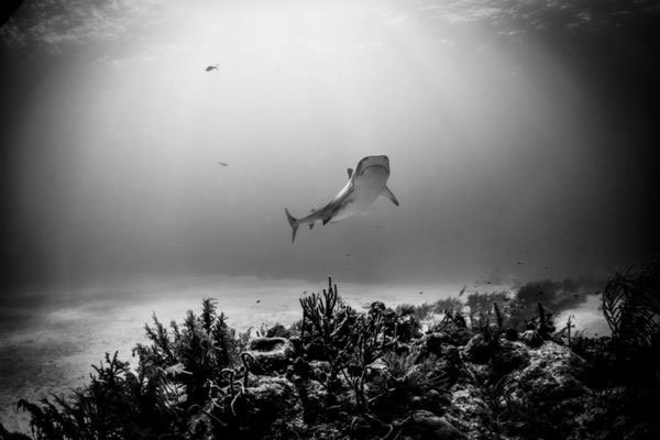 Cá mập ở thủy cung Australia giúp phát hiện sát nhân