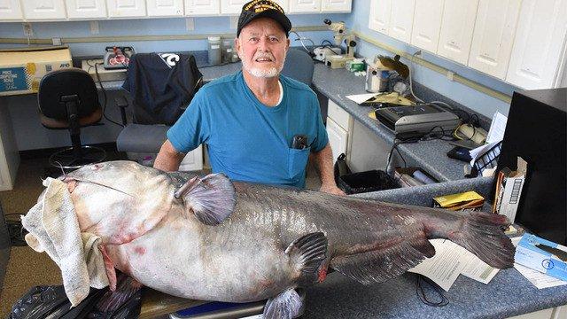 Cá nheo lục nặng 55kg cắn câu ngư dân Mỹ