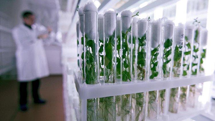 Các chất chống oxy hóa làm chậm quá trình lão hóa ở thực vật