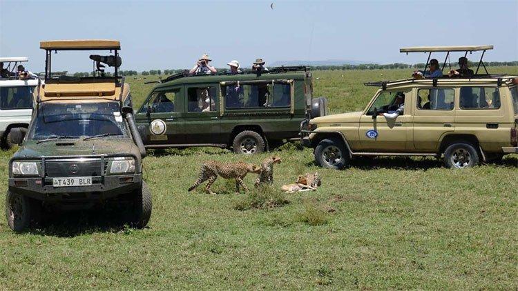 Các chuyến du lịch hoang dã đang gây hậu quả hết sức nghiêm trọng