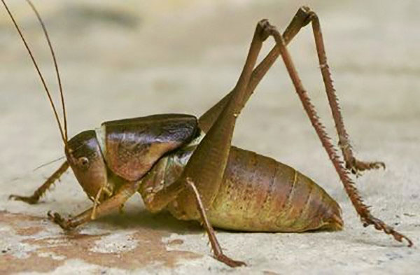 Các loài côn trùng ăn xác chết khiến bạn dựng tóc gáy