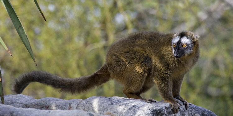 Các loài động vật như hóa điên mỗi khi xảy ra nhật thực