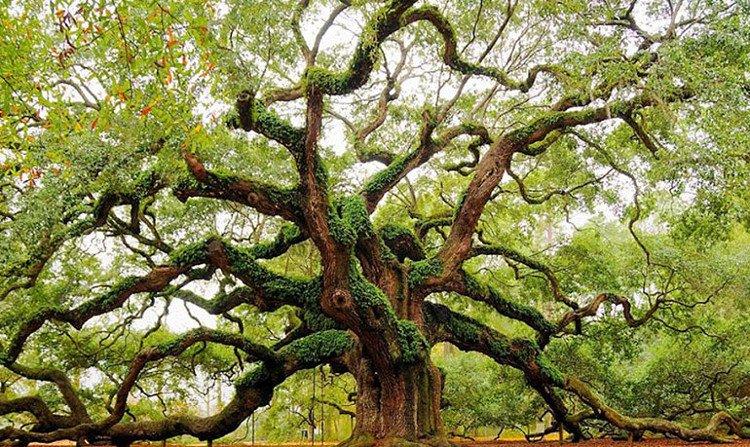 Các nhà khoa học khám phá nhịp tim của cây