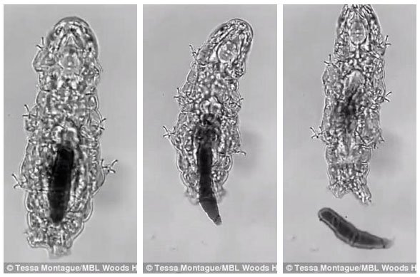 Các nhà khoa học mới chỉ ra được cách sinh vật bất tử trên Trái đất đi cầu