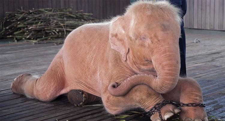 Các nhà khoa học phát hiện con vật ít ngủ nhất