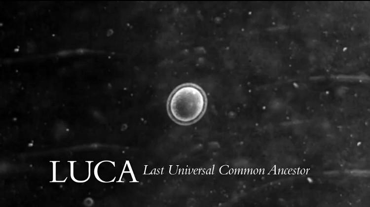 Các nhà khoa học phát hiện LUCA, sinh vật đơn bào được cho là thủy tổ của sự sống