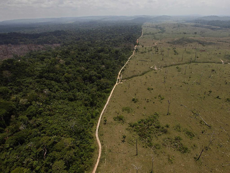 Các nhà khoa học tìm ra giải pháp ít tốn kém và hiệu quả để chống nạn phá rừng