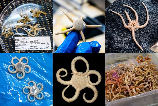 Các nhà khoa học vừa tìm thấy những loài vật kì dị này dưới đáy biển nước Úc