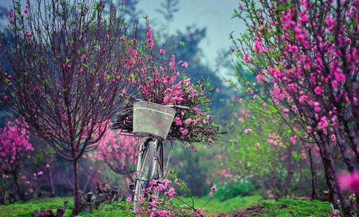 Cách làm hoa đào nở đúng Tết