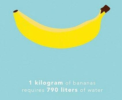 Cần bao nhiêu nước để sản xuất ra 1kg thức ăn cho bạn?