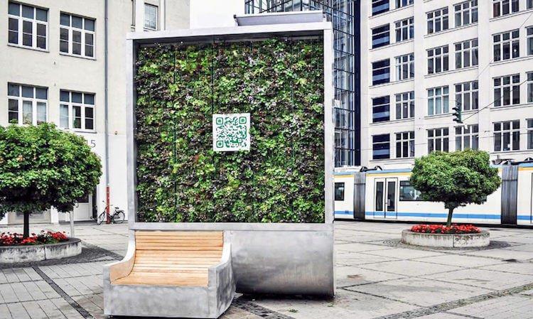 Cây công nghệ cao có thể lọc sạch không khí ô nhiễm