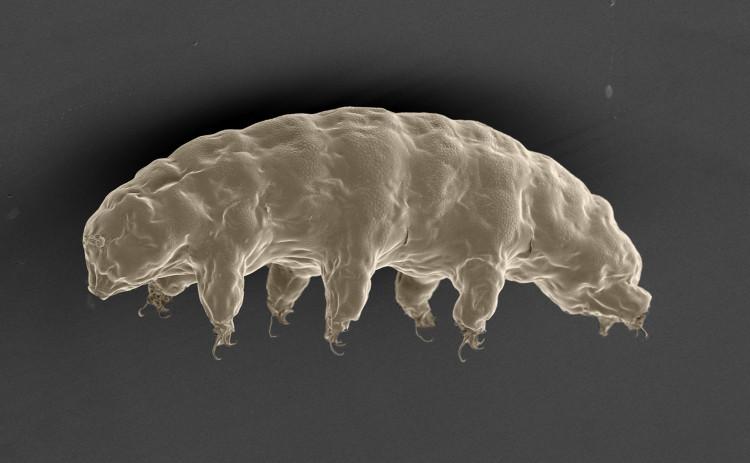 Cấy ghép protein từ sinh vật trường sinh vào tế bào người, bất ngờ vì kết quả