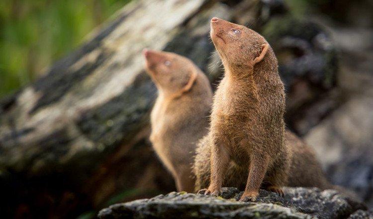 Chẳng phải người hay con gì gần gũi, loài vật xa lạ này cũng biết nhớ ơn và trả ơn