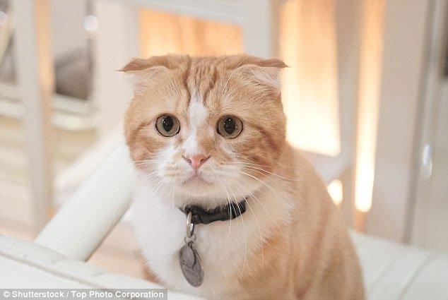 Chàng trai rối loạn cương dương sau khi bị mèo cào