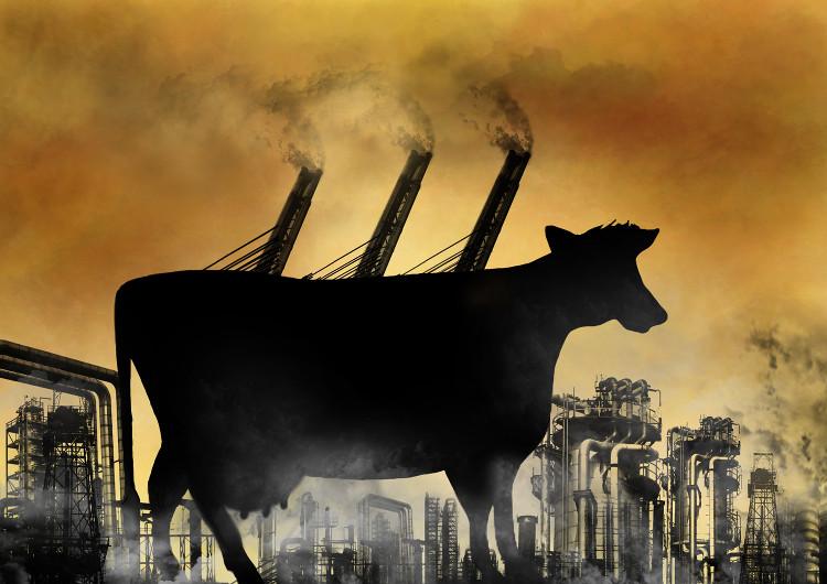 Chỉ cần con người chuyển sang ăn thứ này, Trái đất có thể được cứu rỗi