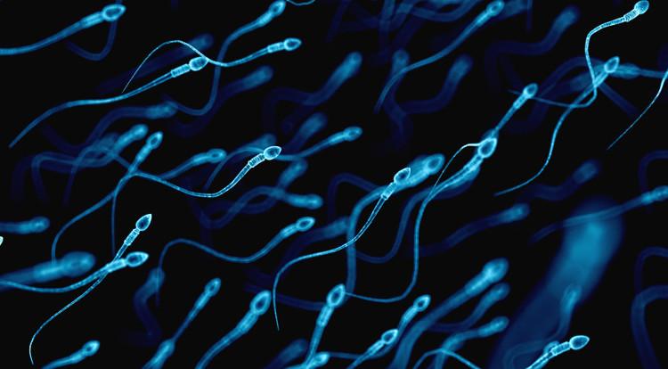 Chỉ với một lần tiêm, thuốc tránh thai nam giới hiệu quả đến 98%