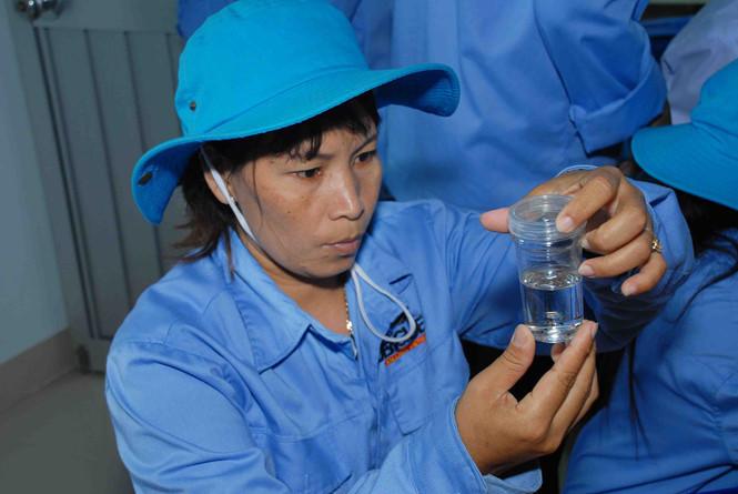 Chuẩn bị thả muỗi ngăn ngừa sốt xuất huyết