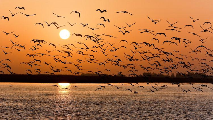 Chúng ta theo dõi việc di cư của các loài chim trên thế giới như thế nào?