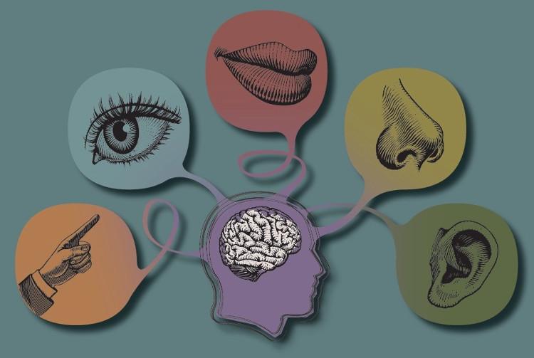 Con người có thật sự chỉ có 5 giác quan?