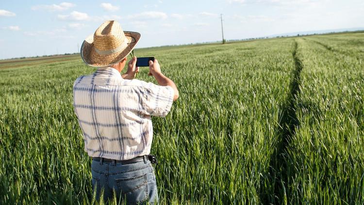 Con người đã đi xa trên những cánh đồng của mình đến thế nào?