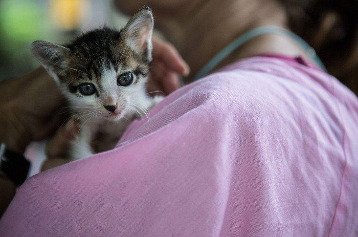 Con người đã thuần hóa loài mèo như thế nào?