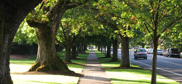 Công bố gây tranh cãi: Trồng cây có thể khiến các thành phố ô nhiễm hơn?