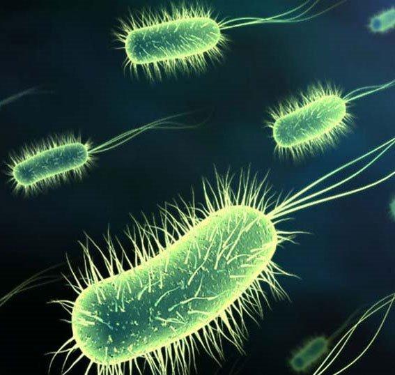 Công nghệ mới: Dò mìn bằng vi khuẩn cảm biến
